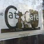 The front window of The Cat Cafe