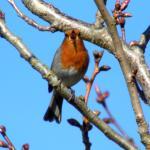 Even the robin sings their praises!