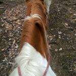 Horseback riding...