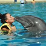 I ❤ Dolphins!
