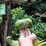 Birds feeding! Cute tame parakeet on our hand!