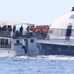 Sri Lanka Navy boat almost crashes into another whale watching boat whilst pursuing whales