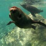 snorkeling with sealions, planned by Yeneka