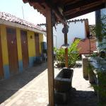 Foto de Iguana Azul