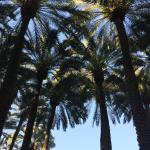 Dining on the patio with tall palm trees all around...love it!
