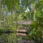 View from the Lagoon, daintree EcoLodge & Spa