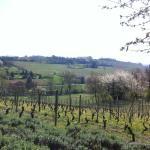 Холмы с виноградниками