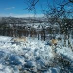 reinders in the garden