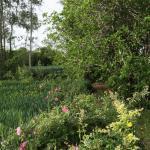 les jardins environnants