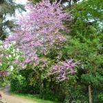 très beau jardin