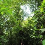 lush areas for hiking