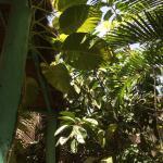 Foto de El Jardin de Frida