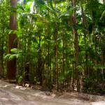 Foto de Central Station Rainforest