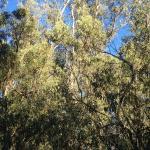 vegetación frondosa