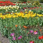 Zaporizhzhya City Children Botanic Gardens