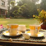 Chai in the garden