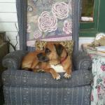 My dog lounging on the front porch