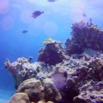 A still Picture of some coral and fish on our second dive