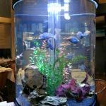 Sammys fish tank