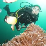 Angol Point Dive Site with White Beach Divers, Boracay
