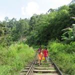 la ligne de chemin de fer à 2 pas de la guesthouse (130414999)