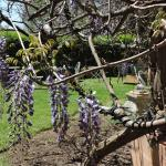 YOU can eat outside on nice days.......we caught the wisteria..