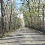 Road to Lodge