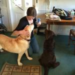 Two well behaved Labs!