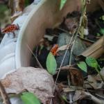 2 frogs in the garden. Beautiful