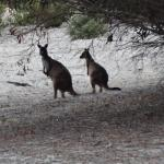 Roos while exploring