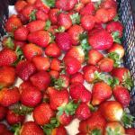 Aberdyfi Strawberries