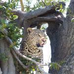 Foto de Kwara Camp - Kwando Safaris
