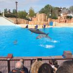 Le spectacle des dauphins