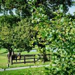 Coworth Park_Equestrian