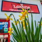 Larkins in Springtime