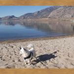 Pet friendly resort my  Lil Chihuahua ruled the beach!