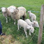 Meanwood Valley Urban Farm