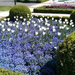 Tulpenbeete
