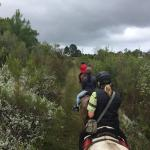 Perdepoort Horse Tails