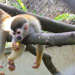 One of the more playful monkeys we were observing.