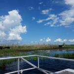 St. Johns River Wildlife Tours