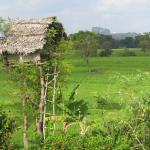Foto de The Hideout Sigiriya