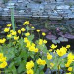 Delightful pond