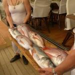 présentation de la pêche du jour