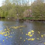 duck race may day bank hol may day sun