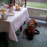 Frühstücken mit Hund