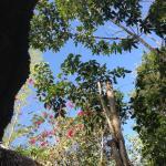 Foto de La Selva Mariposa