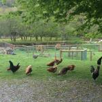 Tavistock Trout Farm and Fishery