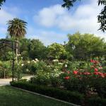 Beautiful updated rose garden.