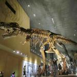 最初に迎えてくれる肉食竜、人と比べるとその大きさが分かる。